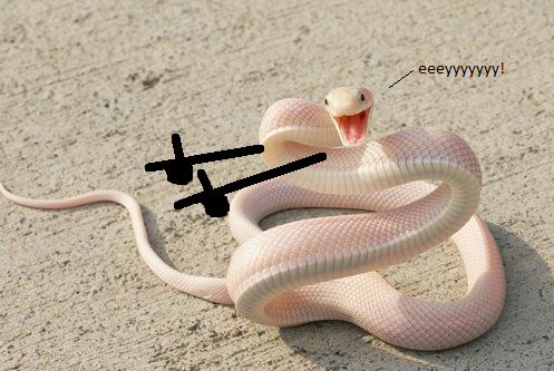 snappy-snake.png